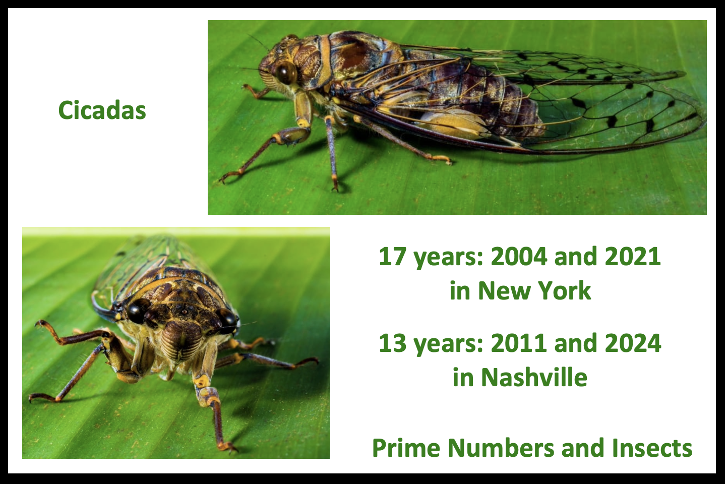 Prime Numbers and Insects